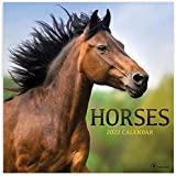 TF PUBLISHING - 2022 Horses Wall Calendar - Home and Office Organizer - Large Monthly Grid Space for Planning and Schedules-