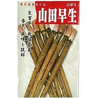 ごぼう 種 【山田早生】 小袋(約10ml)