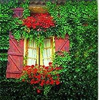 DIYの庭のための盆栽種子の100pcsマルチカラーの種子小説SEED