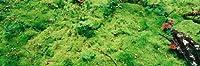 壁360ピール&スティック壁壁画: Moss and Mushrooms Katmai National Park 84 in x 28 in 29967_1760