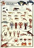 甲殻類 [ポスター]