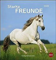 Pferde - Starke Freunde 2020. Postkartenkalender