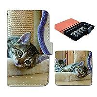 (ティアラ) Tiara プルームテック ケース ploom tech 専用 手帳型 カバー 猫 ねこ ネコ 写真 ペット 子猫 かわいい FP261030000002 ねこ 本体 充電器 たばこ カプセル 全部 収納 禁煙