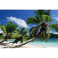 ヤシの木のビーチ - #29894 - キャンバス印刷アートポスター 写真 部屋インテリア絵画 ポスター 50cmx33cm