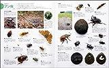 昆虫コレクション―集めて楽しむ (森の休日) 画像