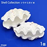 (海水魚 貝殻)シェルコレクション シラナミガイ(かざりシャコガイ) おまかせカラー(1組)(形状お任せ) 本州・四国限定[生体]