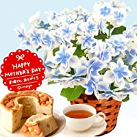 母の日プレゼント 選べる アジサイ 鉢植え5号鉢 スイーツセット (こんぺいとう・ブルー)