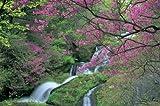 1500スモールピース ツツジ咲く竜頭滝(栃木県日光市) (50x75cm)
