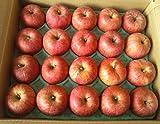 【セール】サンふじ Aランク (贈答用) 約5kg (小玉限定20玉)長野県産りんご [糖度13度以上] 光センサー選果