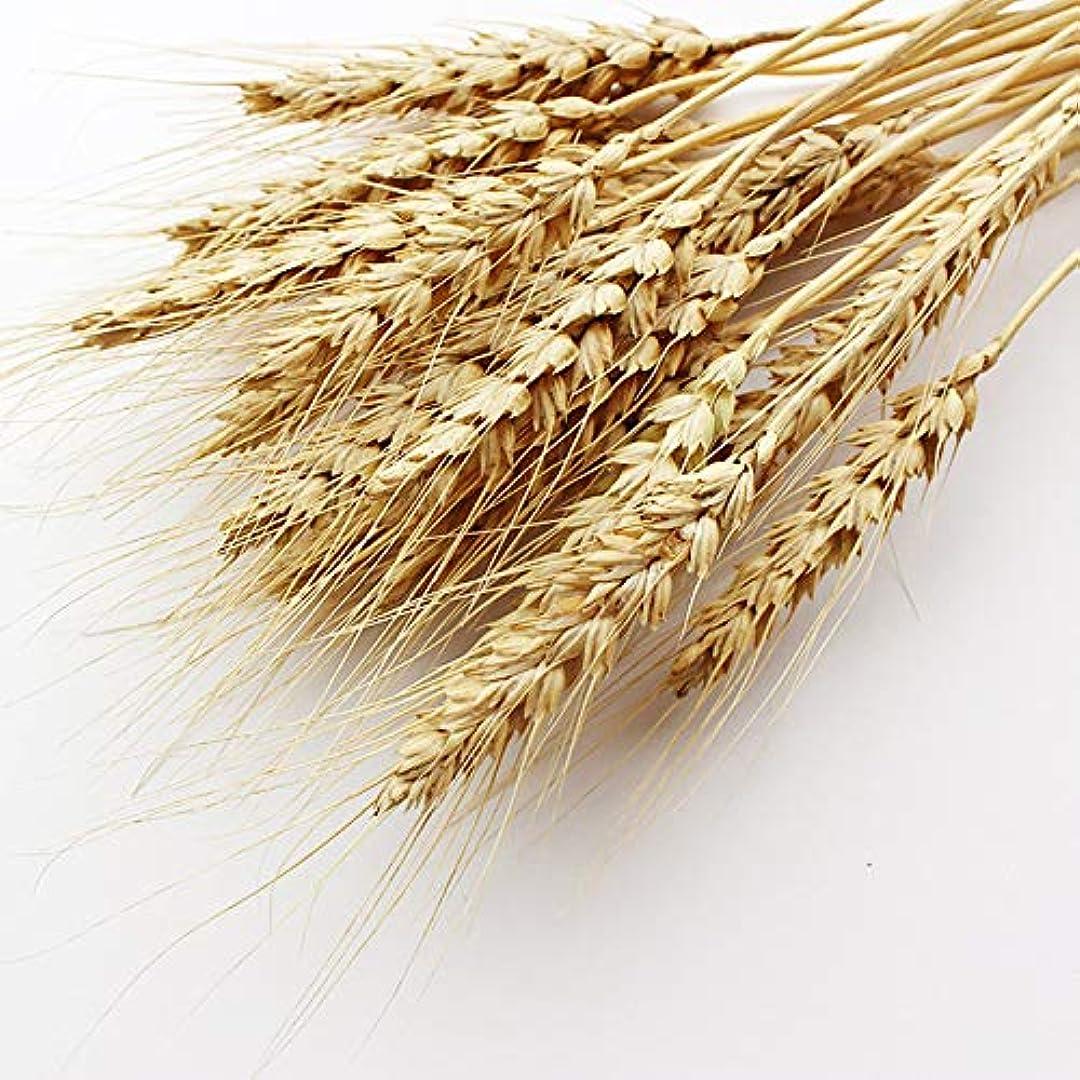 汚染された感嘆符不誠実【熊本県産】有機JAS認定品 大麦の穂 50g 2020年産