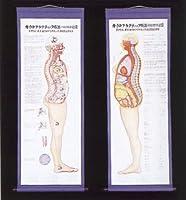 カイロプラクティック療法の図