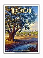 ロディ・ワイナリー - バレーオーク(Quercus lobata) - セントラルヴァレーAVAブドウ園 - カリフォルニアワインカントリーアート によって作成された カーン・エリクソン - アートポスター - 23cm x 31cm