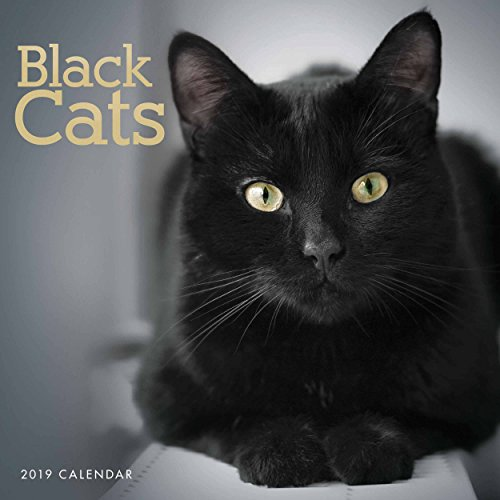 Black Cats W 2019 (Square)