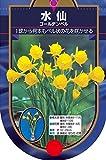 【BULB PLANT】Bulbocodium Golden Bell バルボコジューム水仙・ゴールデン・ベル・ポット苗