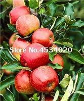 50個/袋アップルツリー盆栽植物健康なオーガニックフルーツ植物多年草鉢植えファミリーフルーツガーデン植物:5