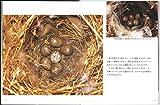 スズメのくらし (たくさんのふしぎ傑作集) 画像