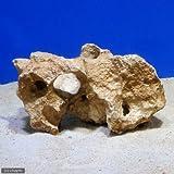 (海水魚)熟成化石サンゴ 一年物 Mサイズ(20cm前後)(1個)(形状お任せ) 本州・四国限定[生体]