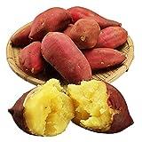 茨城県産さつまいも シルクスイート 約2.5kg サツマイモ