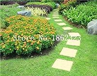 森芝生、多年生常緑芝盆栽植物、美しい庭園観賞植物、簡単に成長すると千個日本語:4