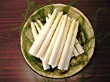 【SSKセールス】会津産 生鮮ホワイトアスパラガス Mサイズ 1kg