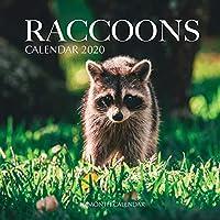 Raccoons Calendar 2020: 16 Month Calendar