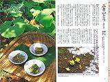 <新版>おいしく食べる山菜・野草 (採り方・食べ方・効能がわかる) 画像
