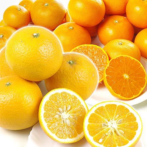 国華園 大人気柑橘せとか・清見セット 10kg ご家庭用