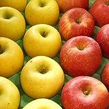 訳あり りんごおすすめ2品種詰合せ Cランク (家庭用) 約5kg [CA貯蔵] 長野産(14玉~18玉)発送可能な2品種
