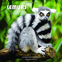 Lemurs 7 x 7 Mini Wall Calendar 2019: 16 Month Calendar
