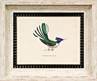 Maxxi Designs 31.75インチ x 26.63インチ シルバー 葉っぱ Bartholomew Hummingbirds 2 額入りアートプリント