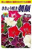 アタリヤ農園 ガーデニング用品 種 桔梗咲朝顔