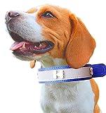 (ウミサト)umisato未来屋 ブルー 大型犬 中型犬 小型犬 用 夜 散歩 反射 首輪 (M)