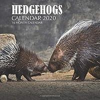 Hedgehogs Calendar 2020: 16 Month Calendar
