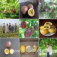 100ピースエキゾチックなパッションフルーツの種紫Passiflora edulisパッション花の種屋外植物盆栽植物