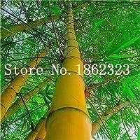 新しいカラフルな竹盆栽、家の庭の装飾鉢植え植物工場卸売30個 のために盆栽妄想ツリー工場:16