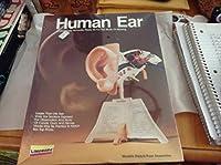 Skilcraft Human Ear Anatomically Accurate Unassembled Kit [並行輸入品]