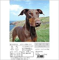 犬服工房 サンタケープ ecoタイプ 大きなドーベルマンDBML~DBXL
