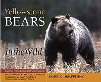 Yellowstone Bears in the Wild