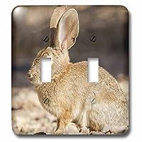 3drose LSP _ 92246_ 2砂漠Cottontail Rabbit Henderson NV us29mpr0064Maresa Pryorダブル切り替えスイッチ