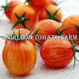 【SEED】 Heirloom Tomato Sunrise Bumble Bee エアルーム・トマト・サンライズ・バンブル・ビー・種子20粒 *2014新品種
