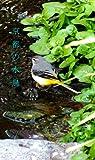 京都の水鳥: Mizudori