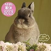 うさぎと暮らすカレンダー2013 ([カレンダー])