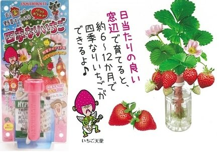 ペットボトル栽培セット ペットマト 四季なりいちご