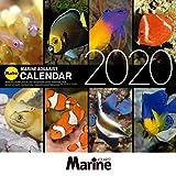 マリンアクアリスト 海水魚カレンダー 2020年カレンダー