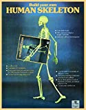 Human Skeleton (Evergreen)