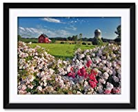 NorthwestアートMall Wild Roses、Willamette Valley、オレゴン州額入りアートプリントby Steve Terrill。 18x24/24x30 inch ST-40041 NFMF-EC