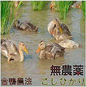 【全額返金保証】熊本産 無農薬 コシヒカリ 2kg 白米