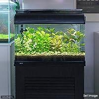 charm(チャーム) (水草 熱帯魚) おまかせ水上葉 レイアウトセット 60cm水槽用 8種(無農薬)(1パック)(水草説明書付) 【生体】