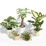 観葉植物お試し5鉢セット【限定商品】何が来るかお楽しみ