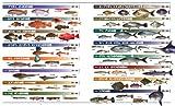 海の魚 大図鑑 画像